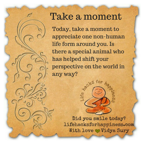 Take a moment #lifehacksforhappiness